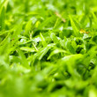 Lush grass in morning — Stock Photo #35199839