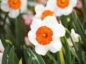 Orange Leaves Within White Flower — Stock Photo