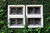 Wooden Window on the green wall — Stock Photo