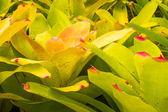 Bromeliad treetop — Stock Photo