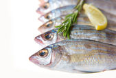 Redfish on the kitchen table with vegetables and spices — Stock Photo