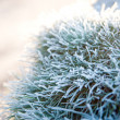 Stock Photo: Leaves of plant in frost.