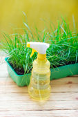 Green grass in a pot and watering can for watering — Foto de Stock