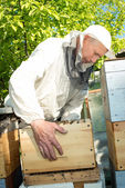 A beekeeper inspects hives. Frame with bees. — Stock Photo