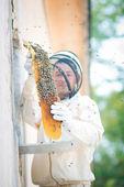Beehive beekeeper inspects — Stock fotografie