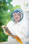 Beehive beekeeper inspects — Photo