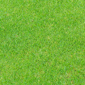 Green grass texture background — Stockfoto
