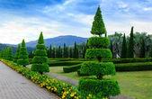 Pine trees garden — Stock Photo