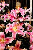 Flor del lirio — Foto de Stock