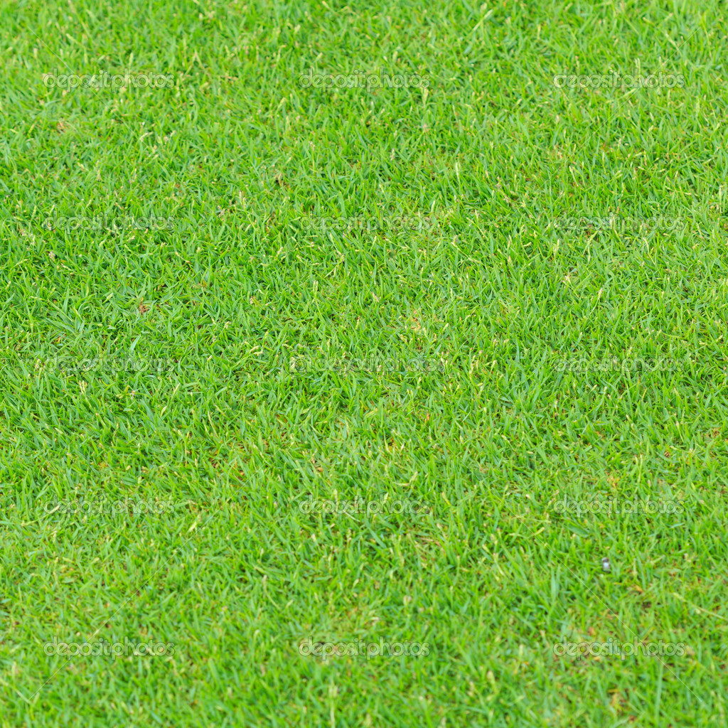 grass background texture - photo #43