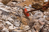 Red hammer — Stock Photo
