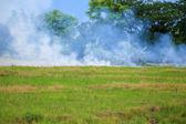 лесной пожар — Стоковое фото