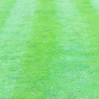 Stock Photo: Green grass texture from golf course