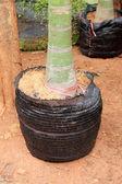 Tree planting for garden — Stock Photo