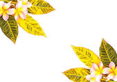 Green and yellow leaves — Stock Photo