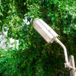 Stock Photo: Fluorescent Lamp under tree