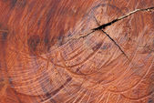 Surface wood log texture background — 图库照片