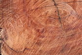 Surface wood log texture background — Stock Photo