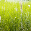 Stock Photo: Blow white flower grass