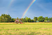 Rice harvester working on the field with rainbow sky background — Stock Photo