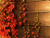 Vivid leaves in the fall — Stockfoto