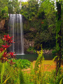 The Millaa Millaa falls — Stock Photo
