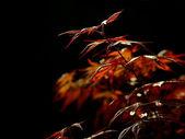 листья осенью — Стоковое фото