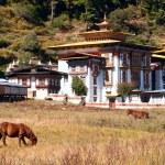 Постер, плакат: Horses walk near the Konchogsum Lhakhang monastery in Jakar Bhutan