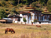 Horses walk near the Konchogsum Lhakhang monastery in Jakar, Bhutan — Stock Photo