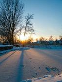Sun shining through the trees in a winter wonderland — ストック写真