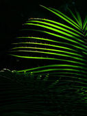 The sun shining through the leaves of palm leaves in the jungle — Stock Photo