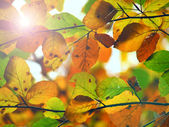 Autumnal background with vivid colorful leafs in the sun — Stok fotoğraf