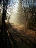 阳光穿过树 — 图库照片