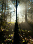 Sun shining through the trees — Stock Photo