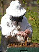 Portrait of a beekeeper with smoker gathering honey at an apiary — Stock Photo