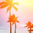 Tropical beach at sunset — Stock Photo #32419331