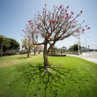 Wide angle tree — Stock Photo #32419931