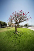 Wide angle tree — Stock Photo
