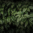 Stock Photo: Dark leaves background