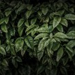 Dark leaves background — Stock Photo