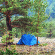 Tent in woods — Foto Stock