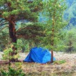 Tent in woods — Stock fotografie