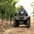 Farmer in vineyard — Stock Photo