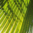 Palm leaf background texture — Stock Photo