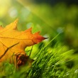 Fall leaf — Stockfoto