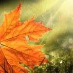 Fall leaf — Stock Photo #32426871