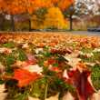 Autumn park — Stock Photo #32426957