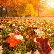 Autumn park — Stock Photo #32426959