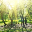 Park trees — Stock Photo