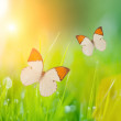 Butterflies over grass — Stock Photo